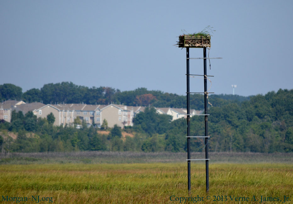 Osprey Nesting Platform in Cheesequake State Park